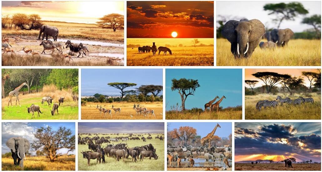 Africa Wildlife 4